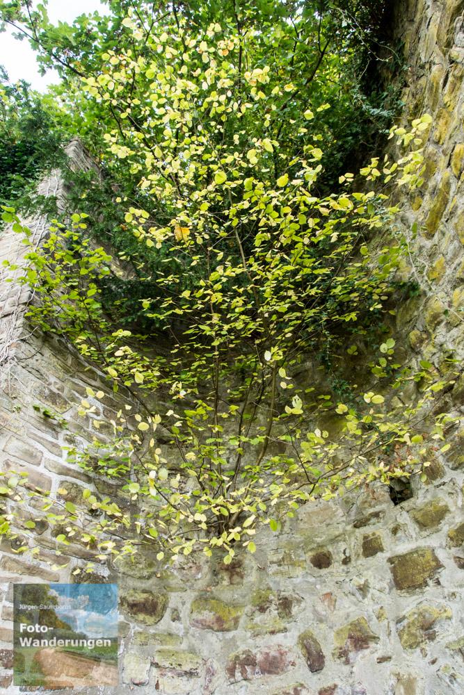 Aus den Ruinen wachsen Bäume